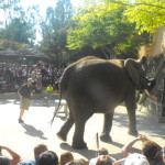 Wordless Wednesday : Awesome Elephant Show