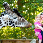 How to Teach Your Children all about Animals