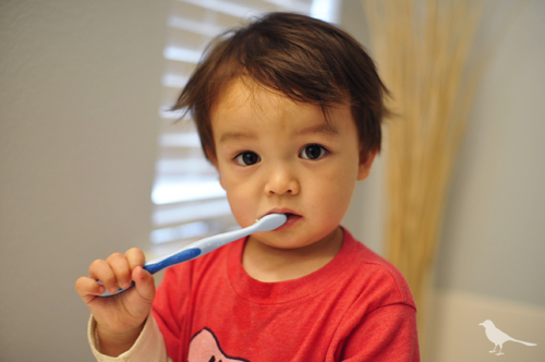 Teaching Your Toddler to Brush Their Teeth