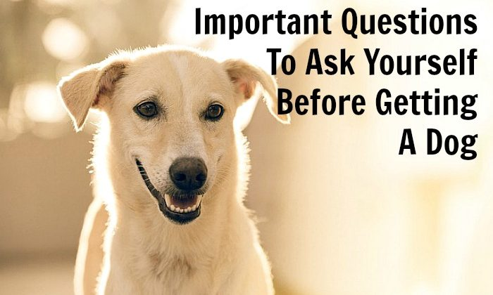 Important Questions To Ask Yourself Before Getting A Dog