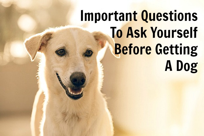 important-questions-to-ask-yourself-before-getting-a-dog